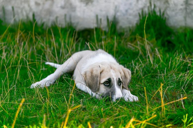 dog-2723082_1920